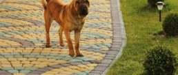 бруківка і пес